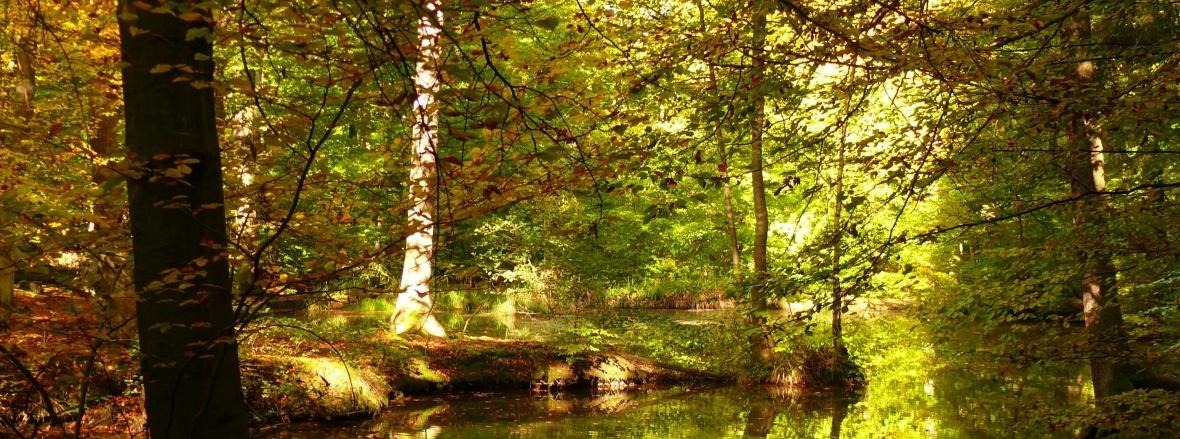 Der Rheinbacher Stadtwald