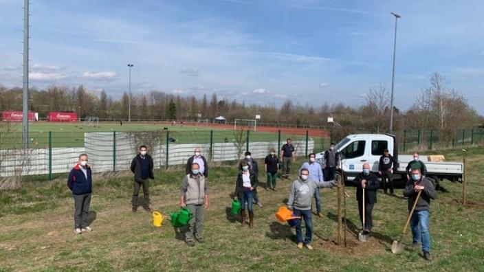 CDU pflanzt eine Streuobstwiese mit alten Apfelsorten